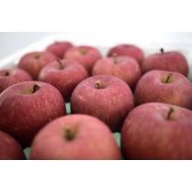 日本青森套袋富士蘋果禮盒8粒裝
