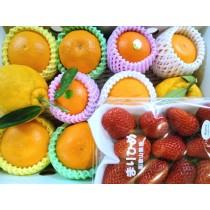 客製化水果組合(NO.564)